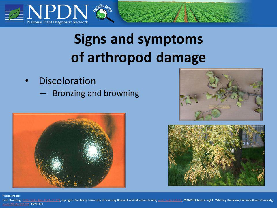 Signs and symptoms of arthropod damage Discoloration Bronzing and browning Photo credit: Left: Bronzing - http://edis.ifas.ufl.edu/ch179; top right: P