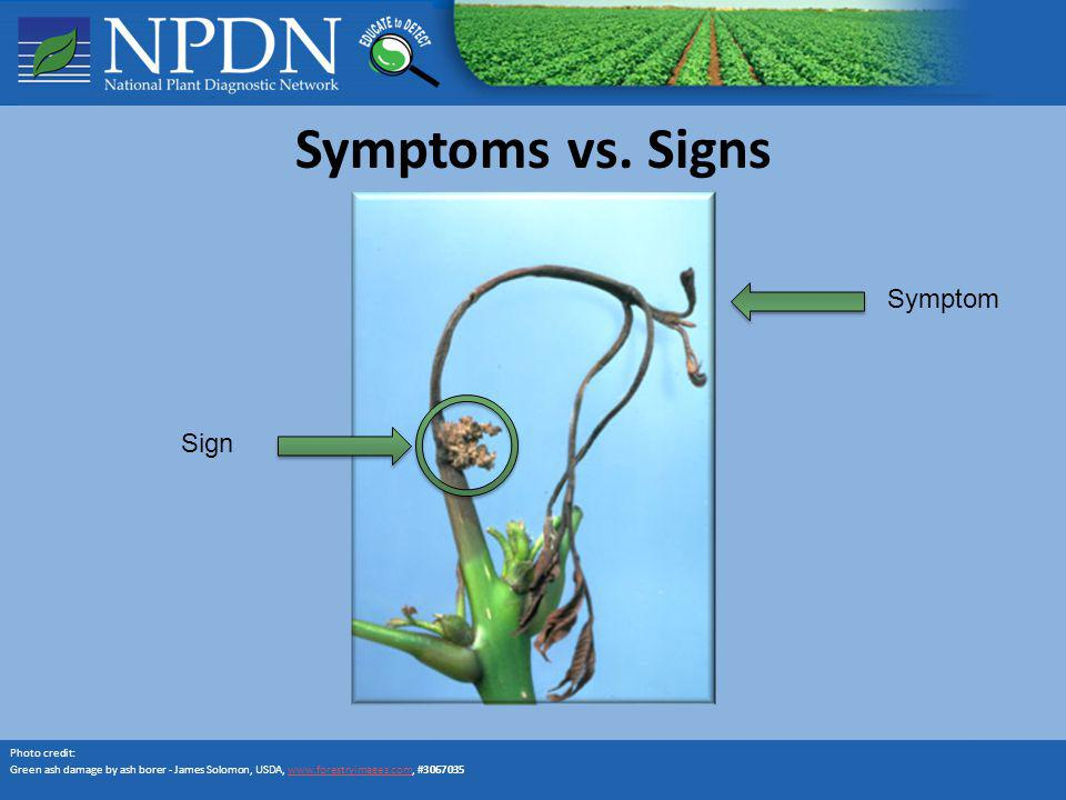 Symptoms vs. Signs Photo credit: Green ash damage by ash borer - James Solomon, USDA, www.forestryimages.com, #3067035www.forestryimages.com Symptom S