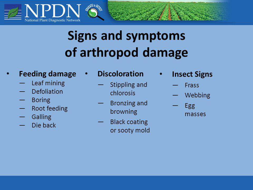 Signs and symptoms of arthropod damage Feeding damage Leaf mining Defoliation Boring Root feeding Galling Die back Discoloration Stippling and chloros