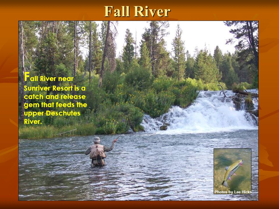 Fall River F all River near Sunriver Resort is a catch and release gem that feeds the upper Deschutes River. Photos by Lee Hicks