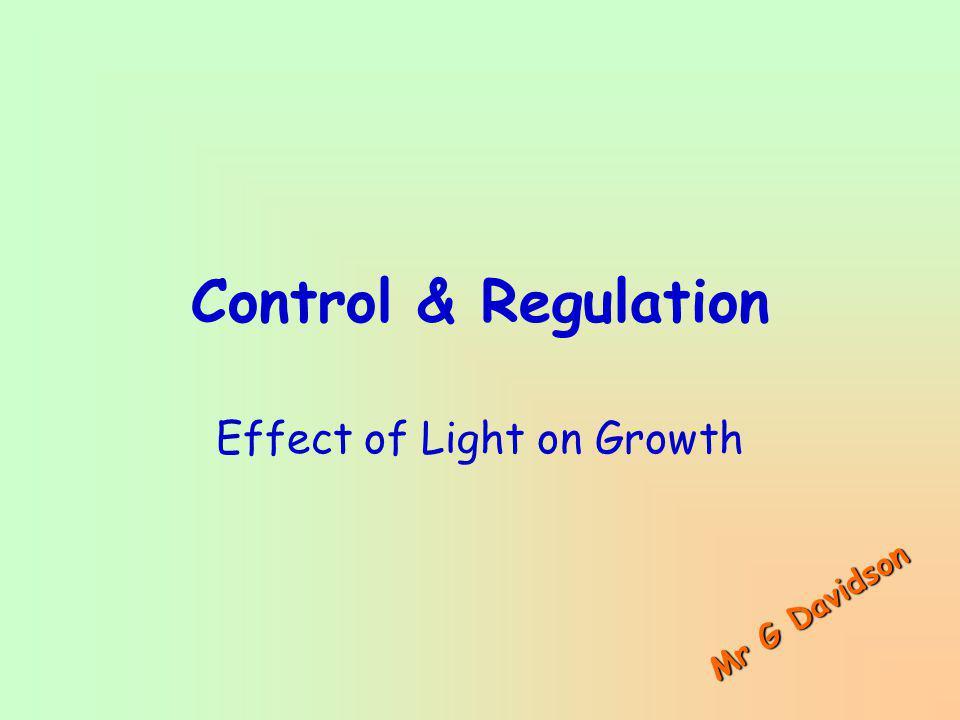 Control & Regulation Effect of Light on Growth M r G D a v i d s o n
