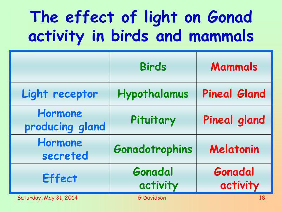 Saturday, May 31, 2014G Davidson18 The effect of light on Gonad activity in birds and mammals BirdsMammals Light receptorHypothalamusPineal Gland Horm