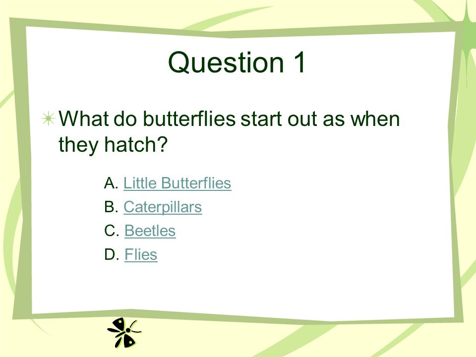 Question 1 What do butterflies start out as when they hatch.