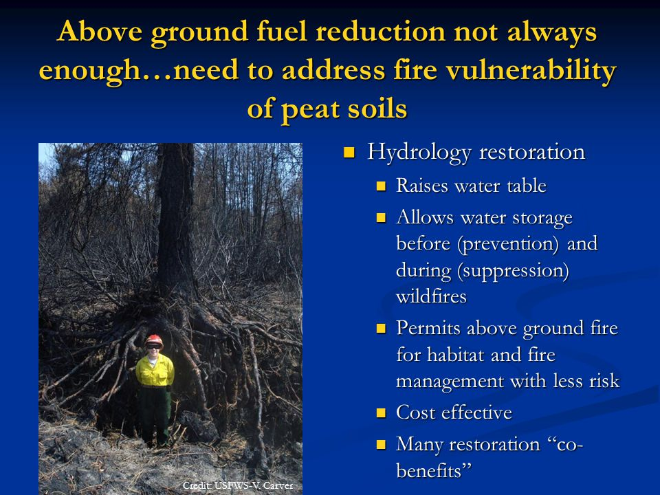 Above ground fuel reduction not always enough…need to address fire vulnerability of peat soils Hydrology restoration Raises water table Allows water storage before (prevention) and during (suppression) wildfires Permits above ground fire for habitat and fire management with less risk Cost effective Many restoration co- benefits Credit: USFWS-V.
