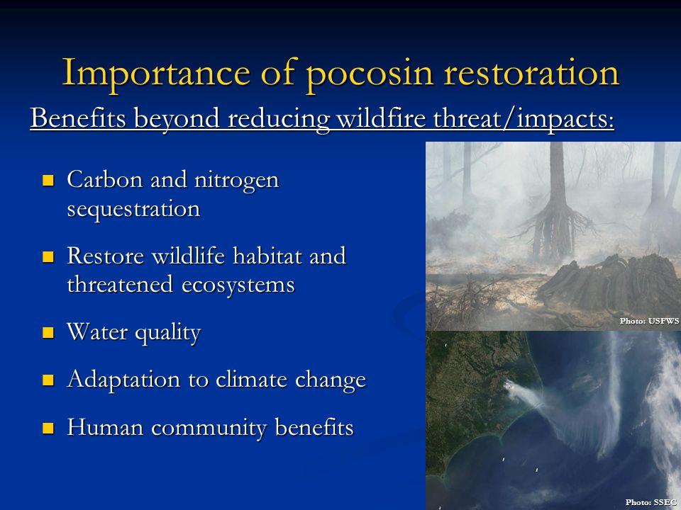 Importance of pocosin restoration Carbon and nitrogen sequestration Carbon and nitrogen sequestration Restore wildlife habitat and threatened ecosyste