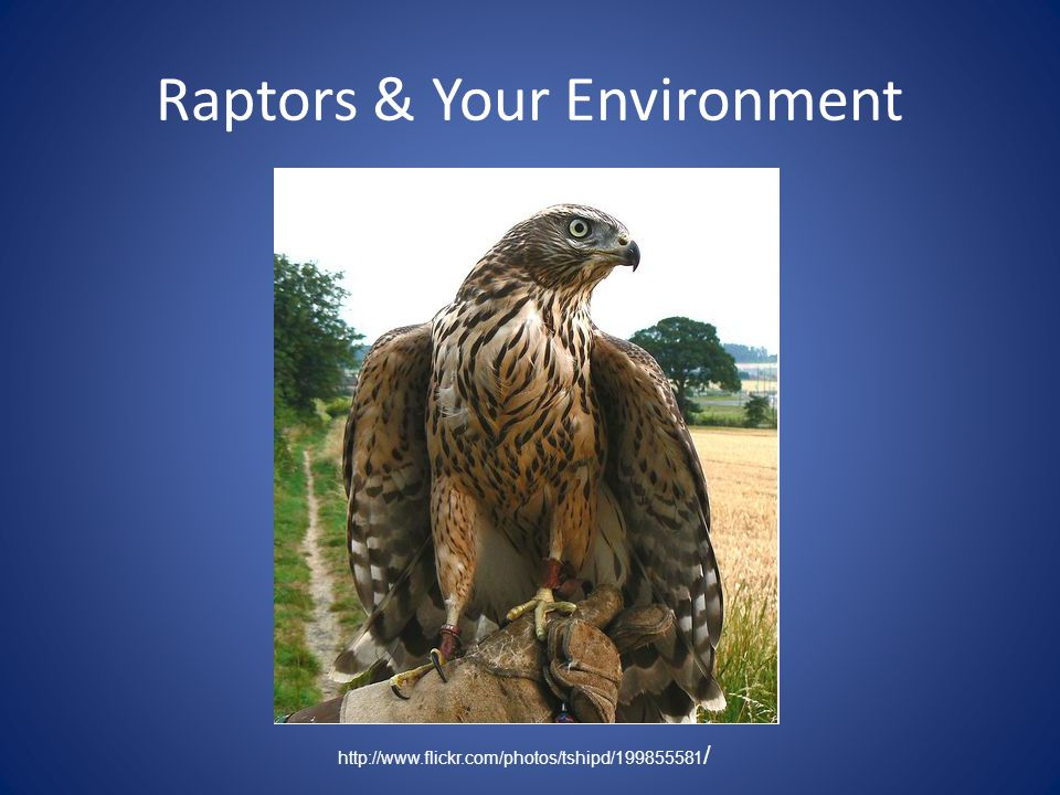 Raptors & Your Environment http://www.flickr.com/photos/tshipd/199855581 /