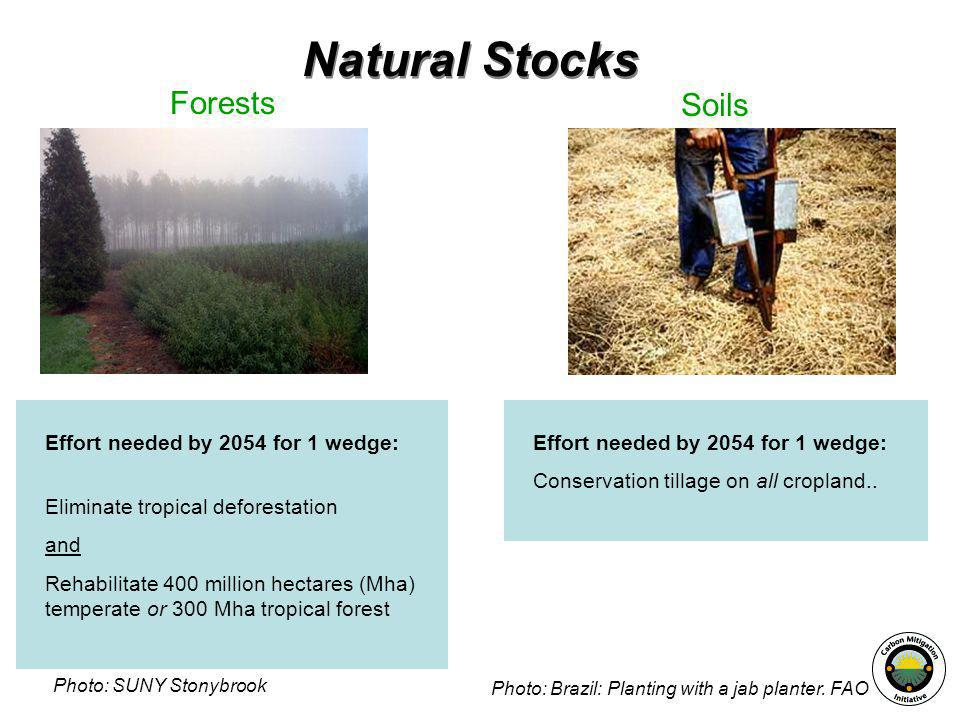 Effort needed by 2054 for 1 wedge: Eliminate tropical deforestation and Rehabilitate 400 million hectares (Mha) temperate or 300 Mha tropical forest N