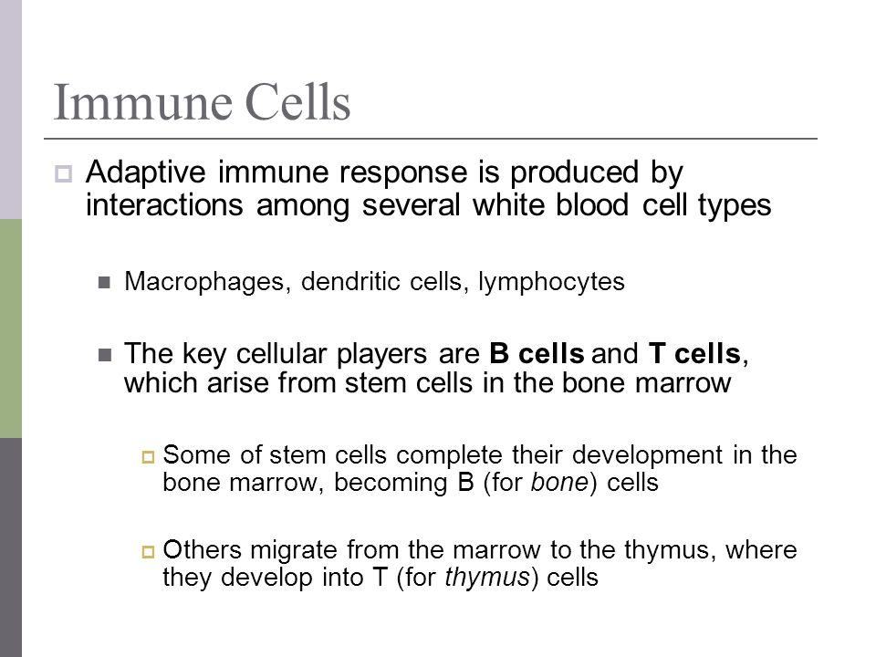 Immune Cells Adaptive immune response is produced by interactions among several white blood cell types Macrophages, dendritic cells, lymphocytes The k