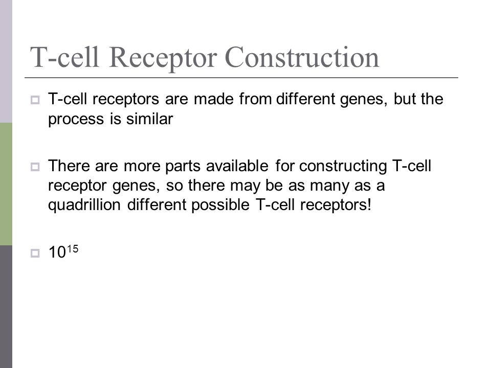 T-cell Receptor Construction T-cell receptors are made from different genes, but the process is similar There are more parts available for constructin