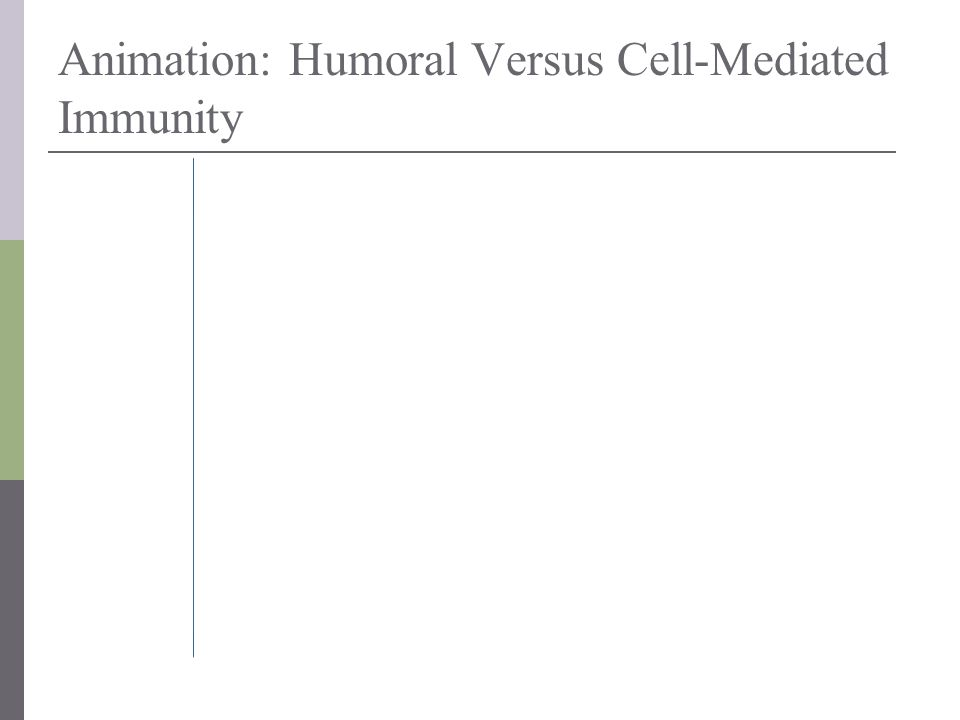 Animation: Humoral Versus Cell-Mediated Immunity