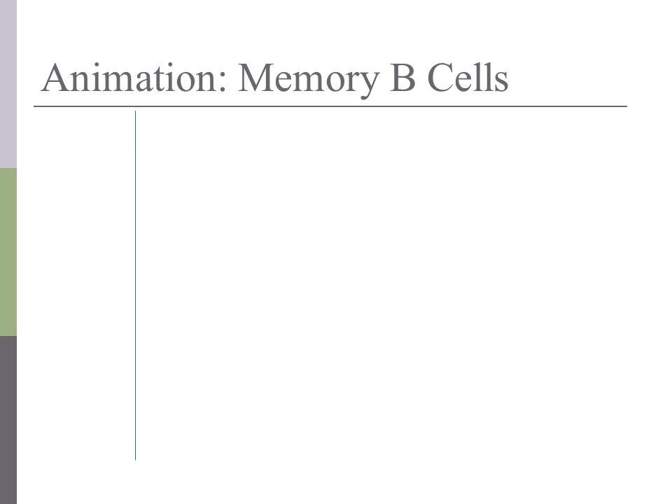 Animation: Memory B Cells