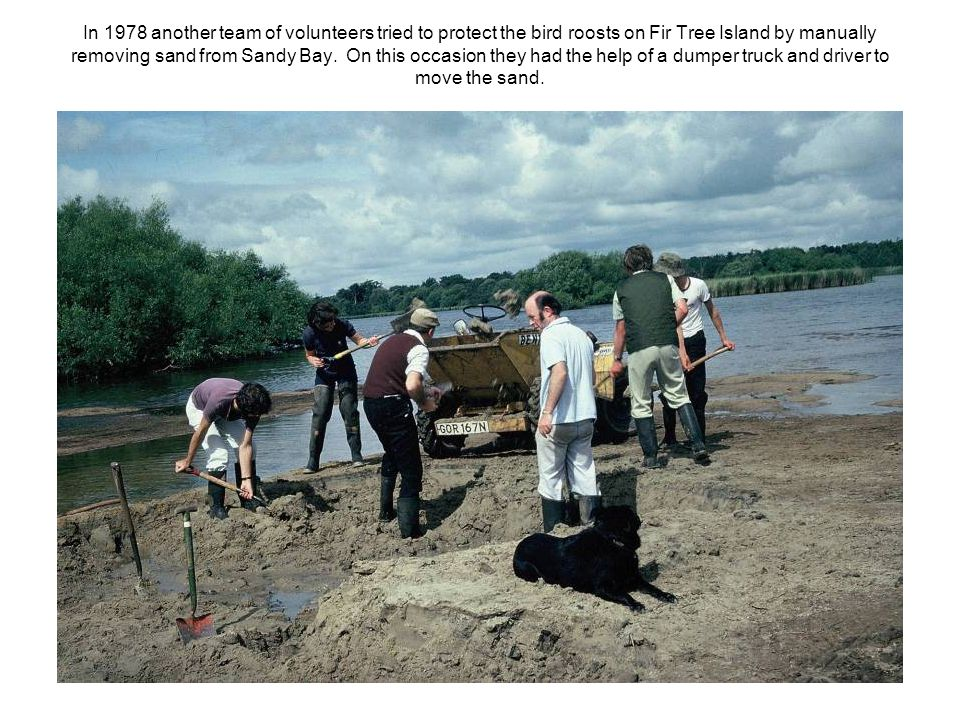 In 1978 another team of volunteers tried to protect the bird roosts on Fir Tree Island by manually removing sand from Sandy Bay.