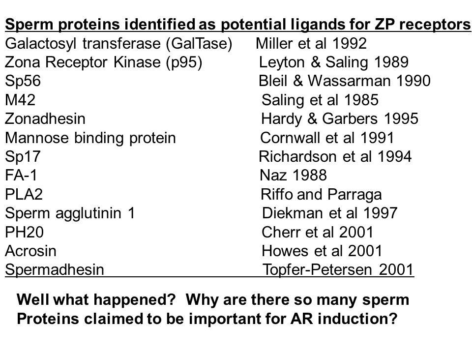 Sperm proteins identified as potential ligands for ZP receptors Galactosyl transferase (GalTase) Miller et al 1992 Zona Receptor Kinase (p95) Leyton &