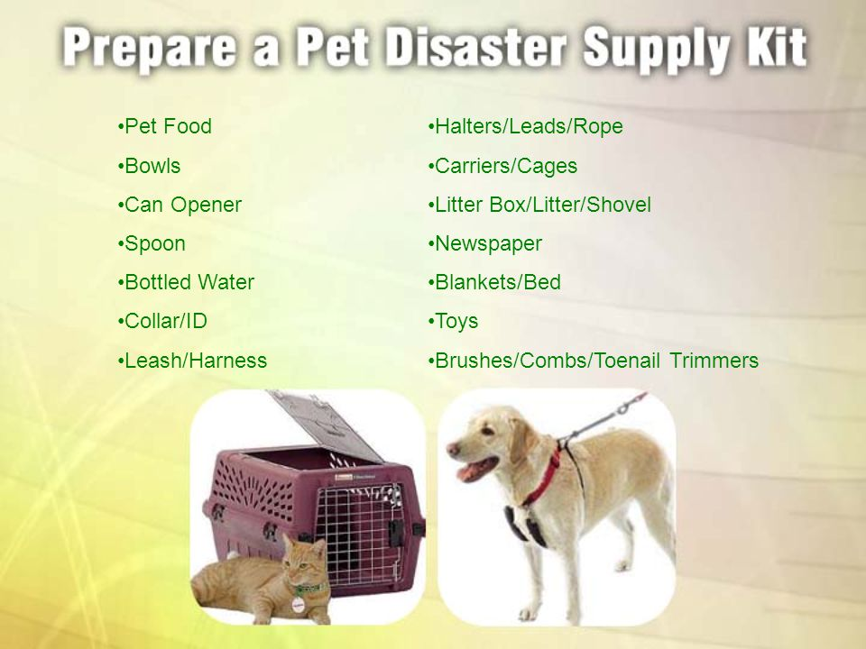Pet Food Bowls Can Opener Spoon Bottled Water Collar/ID Leash/Harness Halters/Leads/Rope Carriers/Cages Litter Box/Litter/Shovel Newspaper Blankets/Be