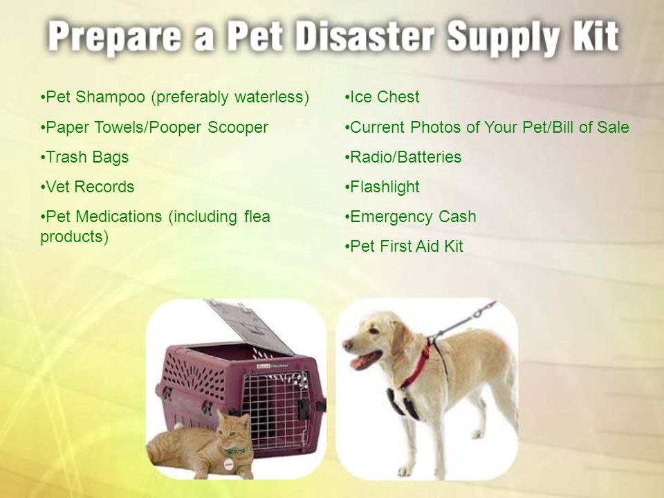 Pet Shampoo (preferably waterless) Paper Towels/Pooper Scooper Trash Bags Vet Records Pet Medications (including flea products) Ice Chest Current Phot