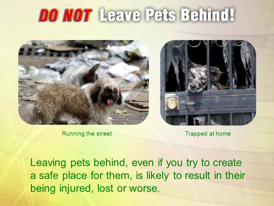 Leaving pets behind, even if you try to create a safe place for them, is likely to result in their being injured, lost or worse. Running the streetTra