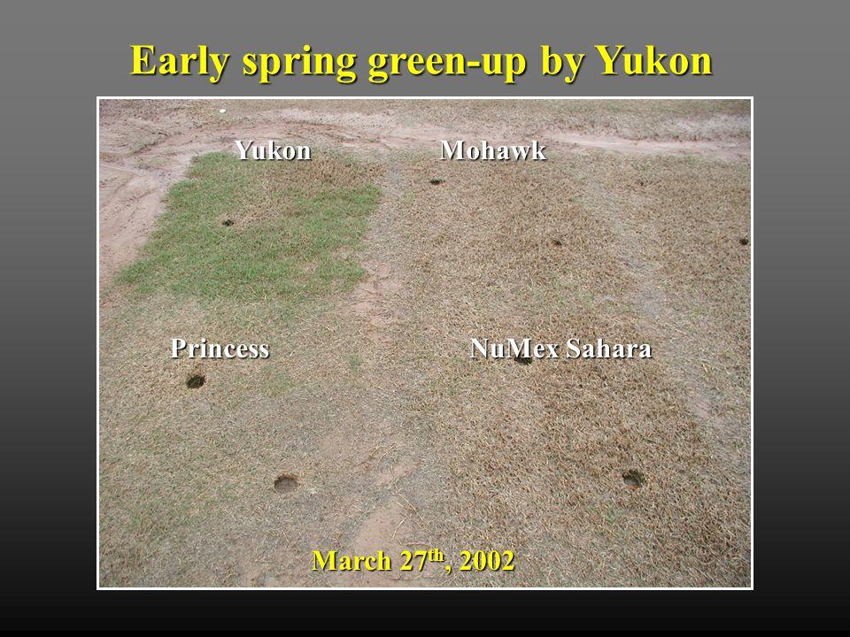 Early spring green-up by Yukon March 27 th, 2002 Mohawk Princess NuMex Sahara Yukon