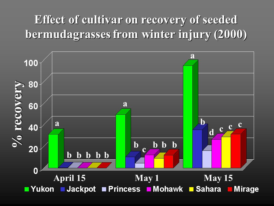 Effect of cultivar on recovery of seeded bermudagrasses from winter injury (2000) May 1May 15April 15 % recovery b a bbbb a bbbb c a b c c c d