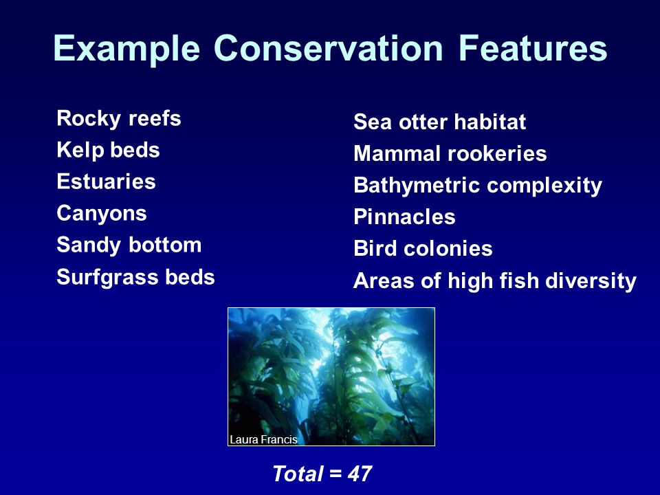 Example Conservation Features Rocky reefs Kelp beds Estuaries Canyons Sandy bottom Surfgrass beds Total = 47 Laura Francis Sea otter habitat Mammal rookeries Bathymetric complexity Pinnacles Bird colonies Areas of high fish diversity