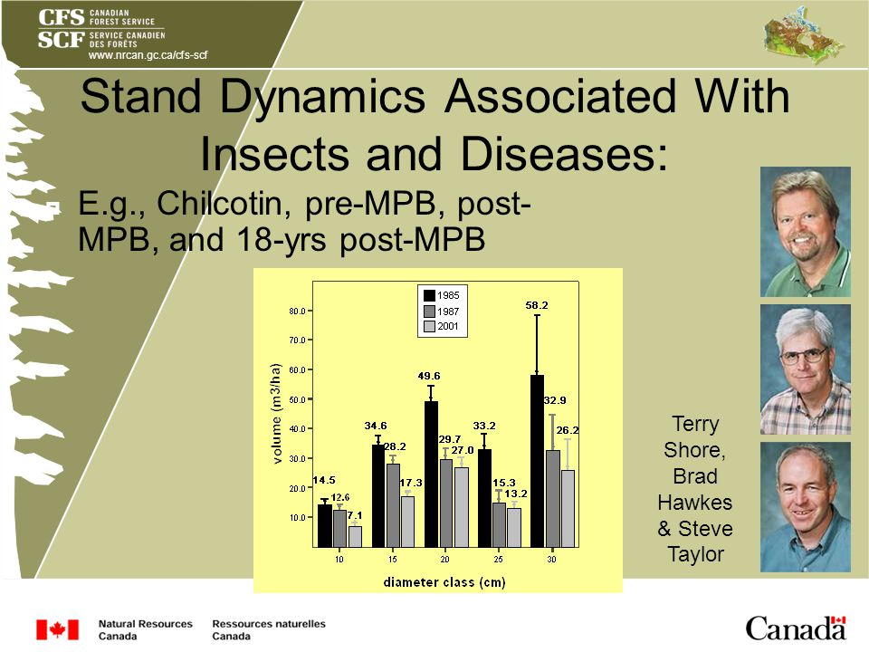 www.nrcan.gc.ca/cfs-scf Stand Dynamics Associated With Insects and Diseases: Terry Shore, Brad Hawkes & Steve Taylor E.g., Chilcotin, pre-MPB, post- MPB, and 18-yrs post-MPB