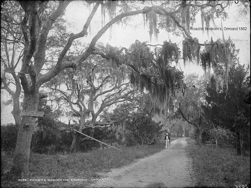 Road to Bostrom's, Ormond 1882