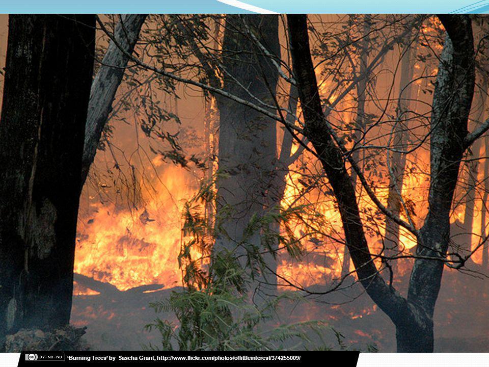 Burning Trees by Sascha Grant, http://www.flickr.com/photos/oflittleinterest/374255009/