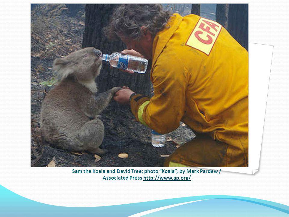 Sam the Koala and David Tree; photo Koala, by Mark Pardew / Associated Press http://www.ap.org/http://www.ap.org/