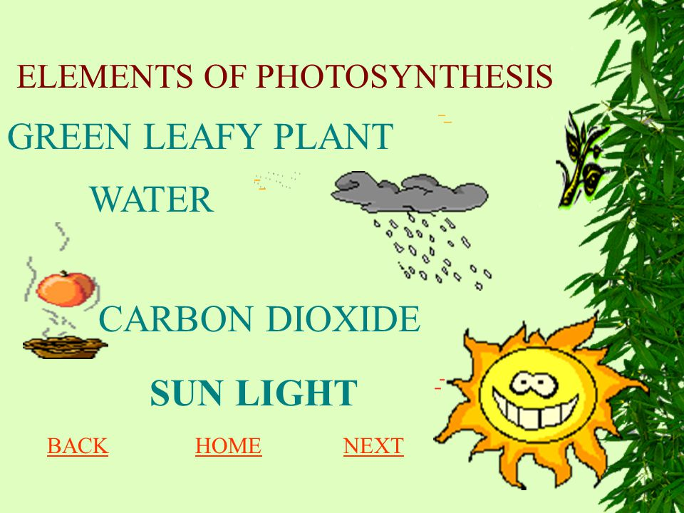 ELEMENTS OF PHOTOSYNTHESIS WATER CARBON DIOXIDE SUN LIGHT GREEN LEAFY PLANT BACKHOMENEXT