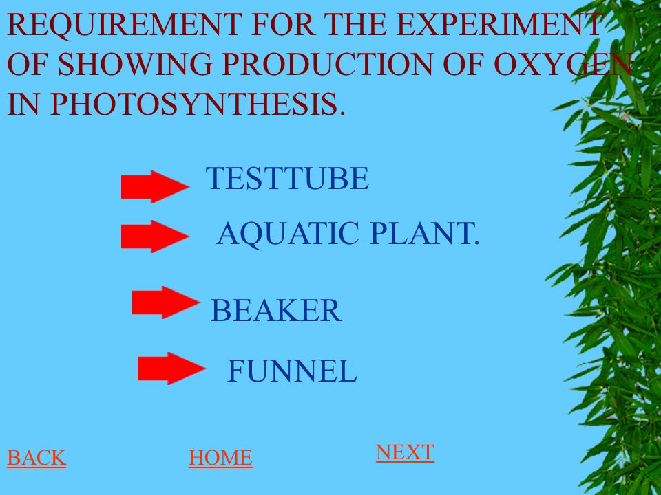 REQUIREMENT FOR THE EXPERIMENT OF SHOWING PRODUCTION OF OXYGEN IN PHOTOSYNTHESIS. AQUATIC PLANT. BEAKER FUNNEL TESTTUBE BACKHOME NEXT
