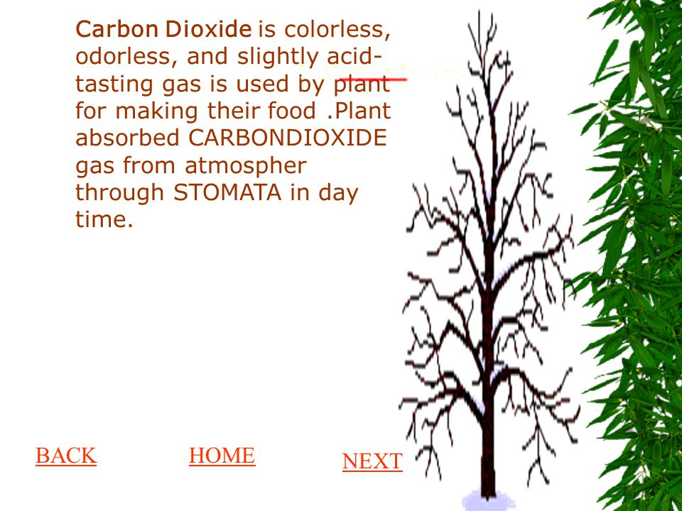 Carbon Dioxide is colorless, odorless, and slightly acid- tasting gas is used by plant for making their food.Plant absorbed CARBONDIOXIDE gas from atm