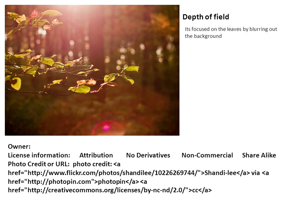 Depth of field Its focused on the leaves by blurring out the background Owner: License information: Attribution No Derivatives Non-Commercial Share Al