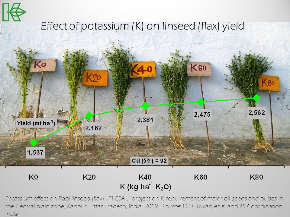 Potassium effect on Rabi linseed (flax). IPI-CSAU project on K requirement of major oil seeds and pulses in the Central plain zone, Kanpur, Uttar Prad