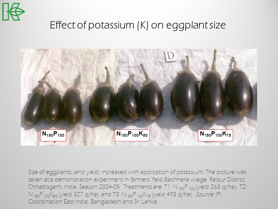 Effect of potassium (K) on eggplant size Size of eggplants (and yield) increased with application of potassium. The picture was taken at a demonstrati