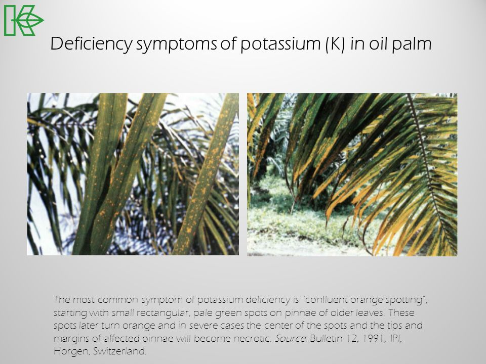 Deficiency symptoms of potassium (K) in oil palm The most common symptom of potassium deficiency is confluent orange spotting, starting with small rec