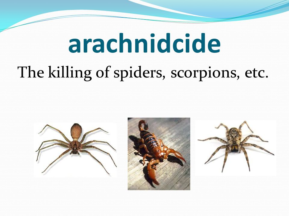 arachnidcide The killing of spiders, scorpions, etc.