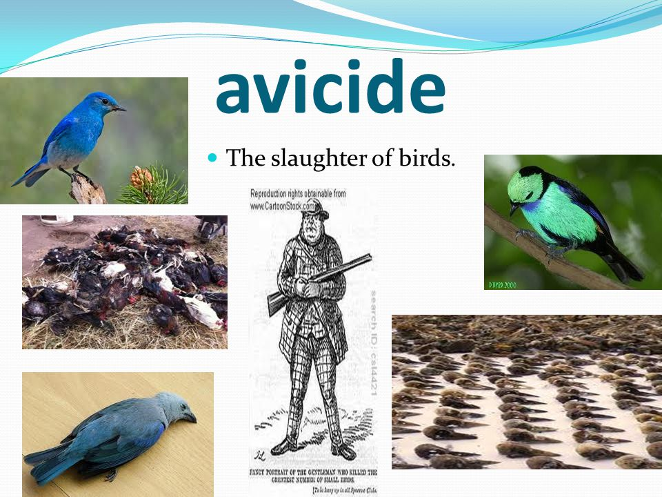 avicide The slaughter of birds.