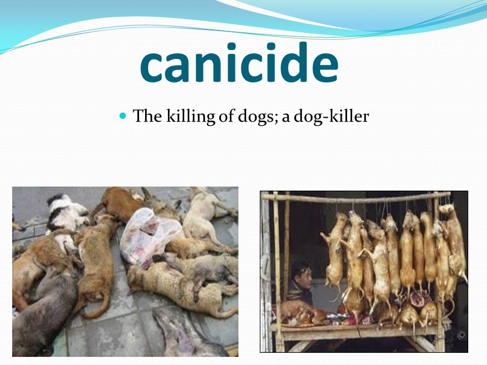 canicide The killing of dogs; a dog-killer