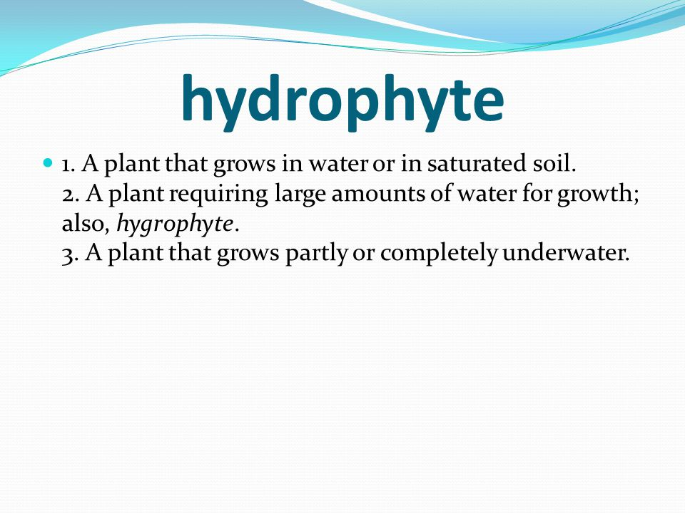hydrophyte 1. A plant that grows in water or in saturated soil. 2. A plant requiring large amounts of water for growth; also, hygrophyte. 3. A plant t