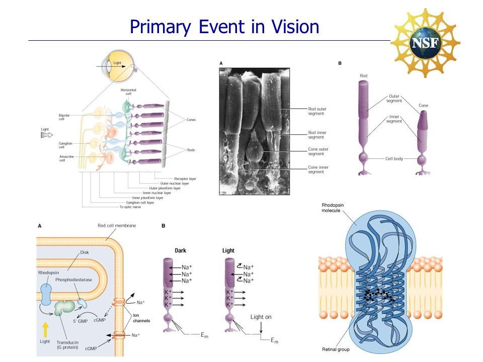 Primary Event in Vision