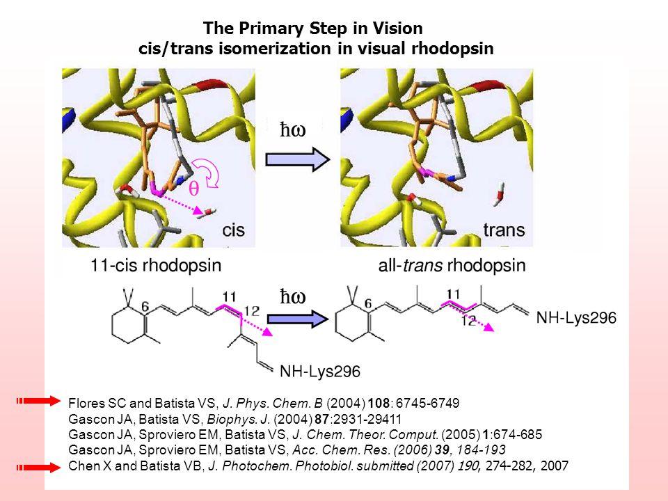 Flores SC and Batista VS, J. Phys. Chem. B (2004) 108: 6745-6749 Gascon JA, Batista VS, Biophys.