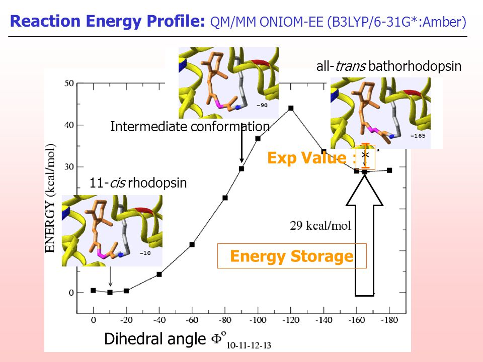 Energy Storage Reaction Energy Profile: QM/MM ONIOM-EE (B3LYP/6-31G*:Amber) * Exp Value : Dihedral angle 11-cis rhodopsin all-trans bathorhodopsin Int