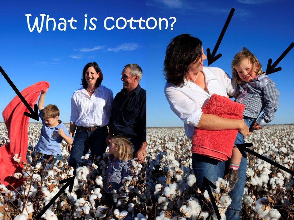 What is cotton?