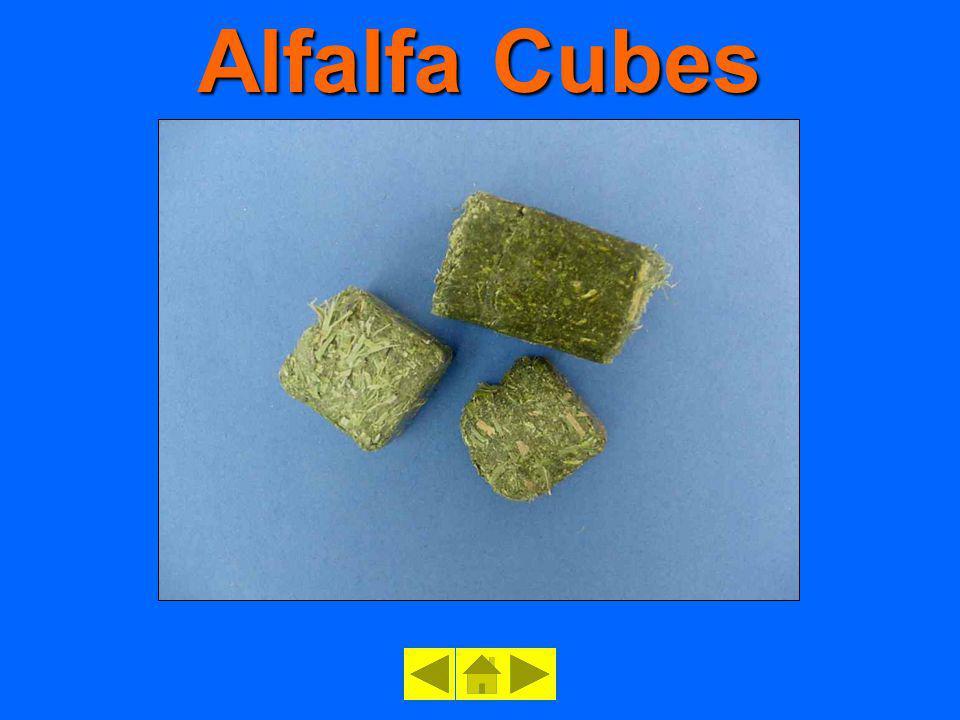 Alfalfa Leaf Meal