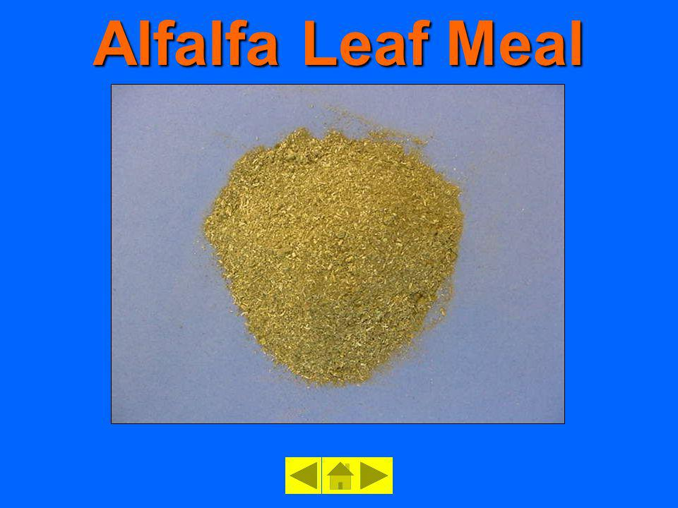 Alfalfa Leaf Meal