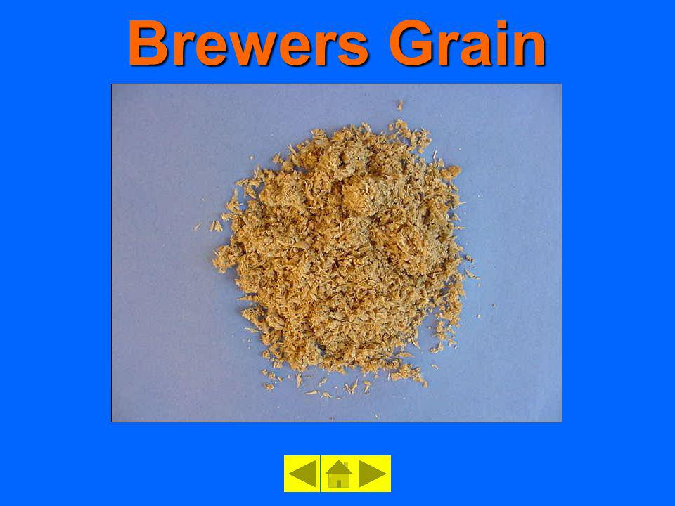 Brewers Grain