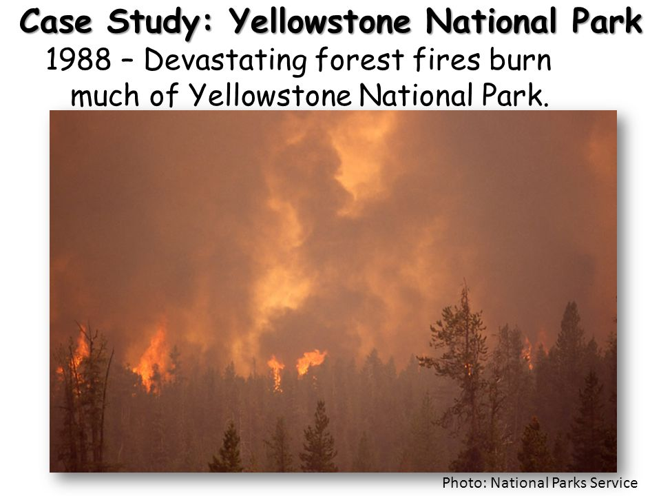 Case Study: Yellowstone National Park 1988 – Devastating forest fires burn much of Yellowstone National Park. Photo: National Parks Service