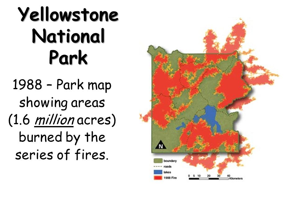 Yellowstone National Park 1988 fires – The immediate aftermath. Photo: National Parks Service