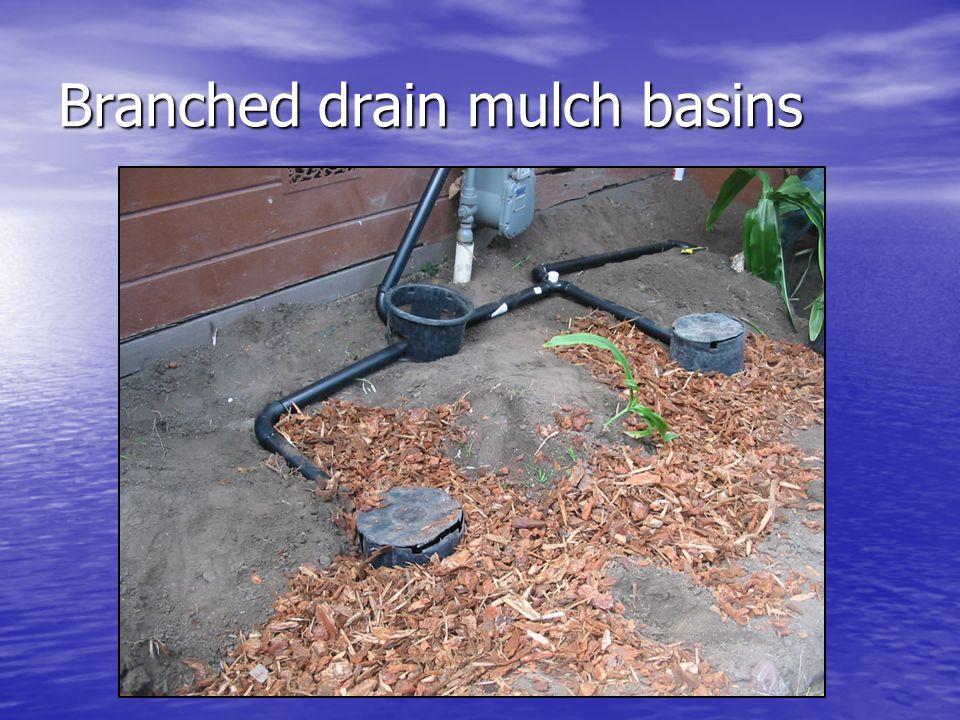Branched drain mulch basins