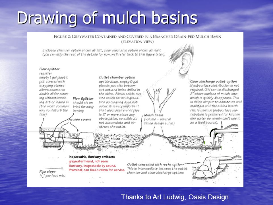 Drawing of mulch basins Thanks to Art Ludwig, Oasis Design