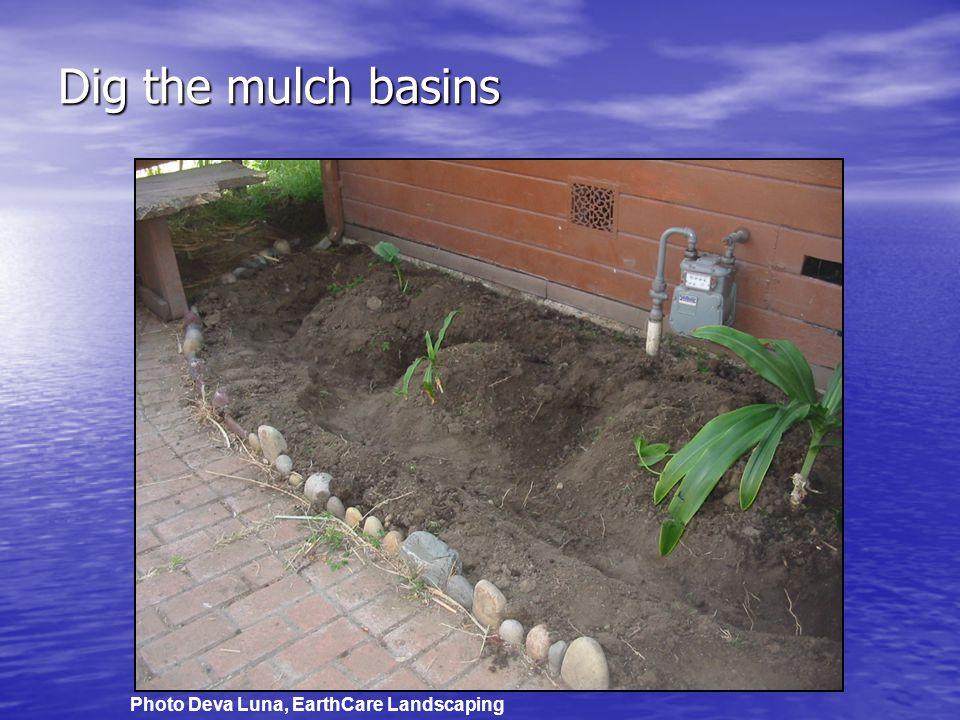 Dig the mulch basins Photo Deva Luna, EarthCare Landscaping